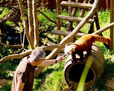 Soins animaliers au Zoo de Trégomeur
